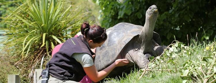 Une soigneuse dans un zoo